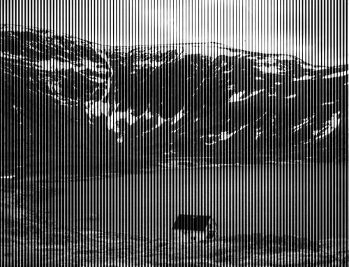 Arnold Johansen - Var_web