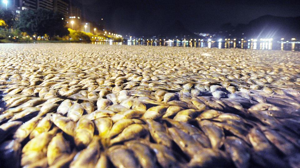 Rio Fisk