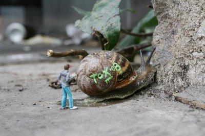 snail2-blog.jpg