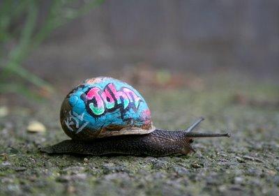 snailgraf1-blog.jpg